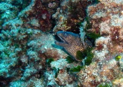 Lopud Island Underwater Beauty